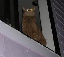 Cats Night Vision