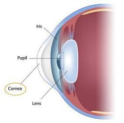 how to clean your cornea