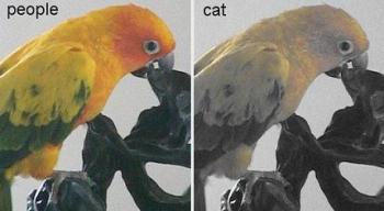 How cat views colors