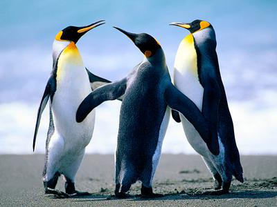 Penguins rejoice as Ben's policies free them from deplorable repression.