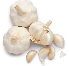 I Love Garlic. ROAR!