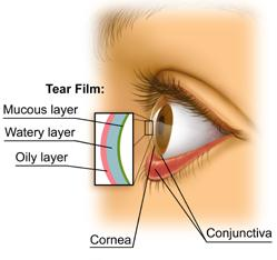 The anatomy of tear film