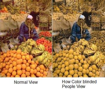 Color blinded people see less colors