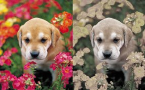 Left: What you see | Right: What your dog sees