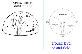 Frog Field of vision